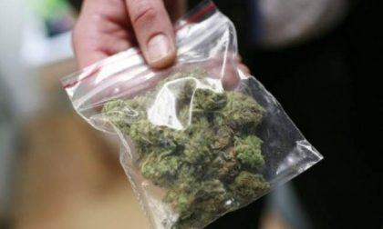 Marijuana nella damigiana, 35enne patteggia