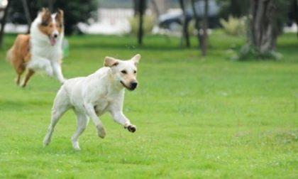 Corso cinofilo per migliorare la relazione con il cane