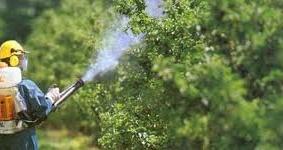 Verde pubblico, domani i trattamenti fitosanitari