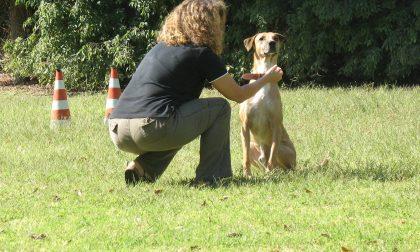 Patentino proprietari di cani inizia l'ottavo corso