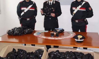 Arrestati con 43 chili di papavero da oppio