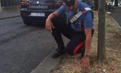 Spaccio ai giardini pubblici, arrestato un nigeriano