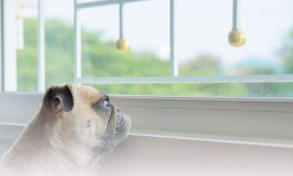 Lasciare il cane a casa da solo in serenità