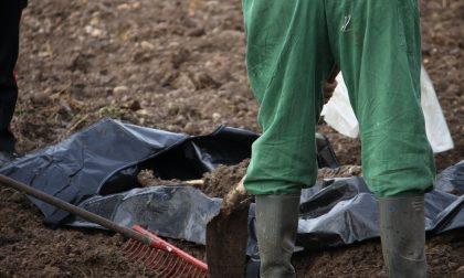 Cadavere nel campo, una decina di giorni alla verità