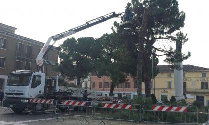 Villafranca, iniziati i lavori di abbattimento dei pini di piazza Giovanni XXIII