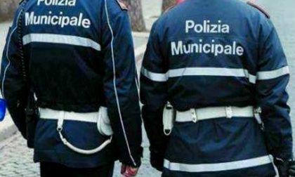 Municipale di Verona: aumentano i pedoni investiti