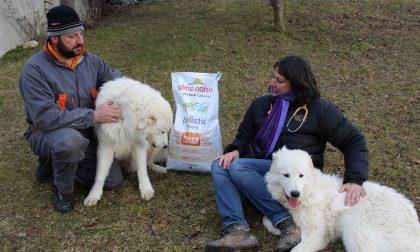 Cani a difesa del gregge e a tutela del lupo