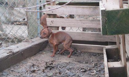 Isola della Scala, confermato il sequestro dei cani