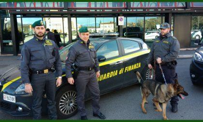 Droga sequestrato un chilo di marjuana dalla guardia di finanza di Verona