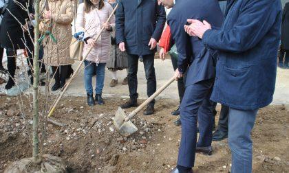 Patto di sussidiarietà, il Comune e l'università insieme per l'ambiente