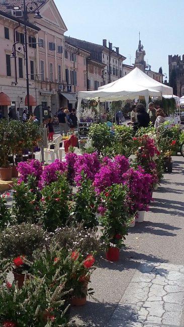 Villafranca in fiore