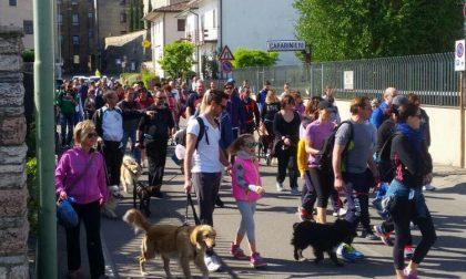 """Monteforcane 2018 cani """"in marcia"""" sulle colline dell'Alpone"""