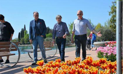 La tulipanomania esplode a Bardolino