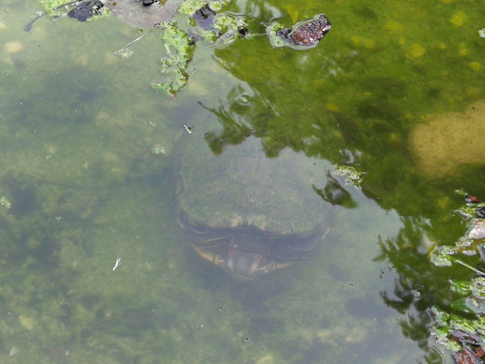Giardini del Castello Villafranca rispuntano le tartarughe