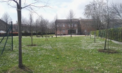Nuovi alberi piantati a Sommacampagna