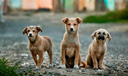 Benessere animale Verona