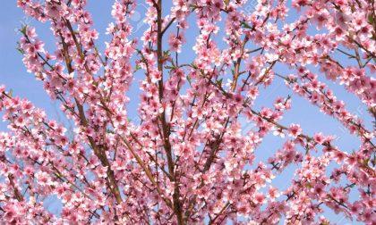 Benvenuta primavera Mozzecane in fiore