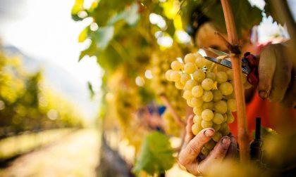 Il vino veneto mette le ali Verona top per produzione