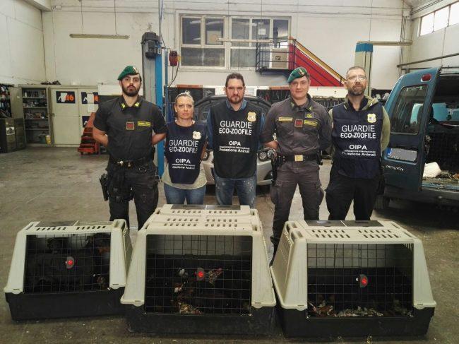 Salvati 12 cuccioli dalla guardia di finanza di Verona