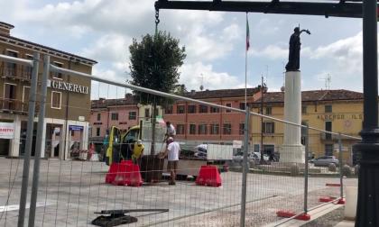 Piazza di Villafranca la posa degli alberi VIDEO