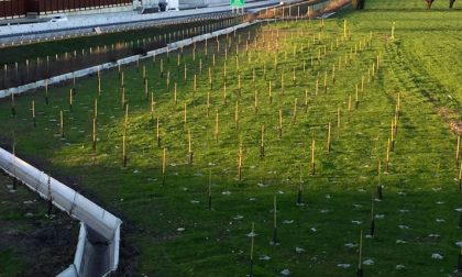 Un'area verde a Caselle per la mitigazione ambientale