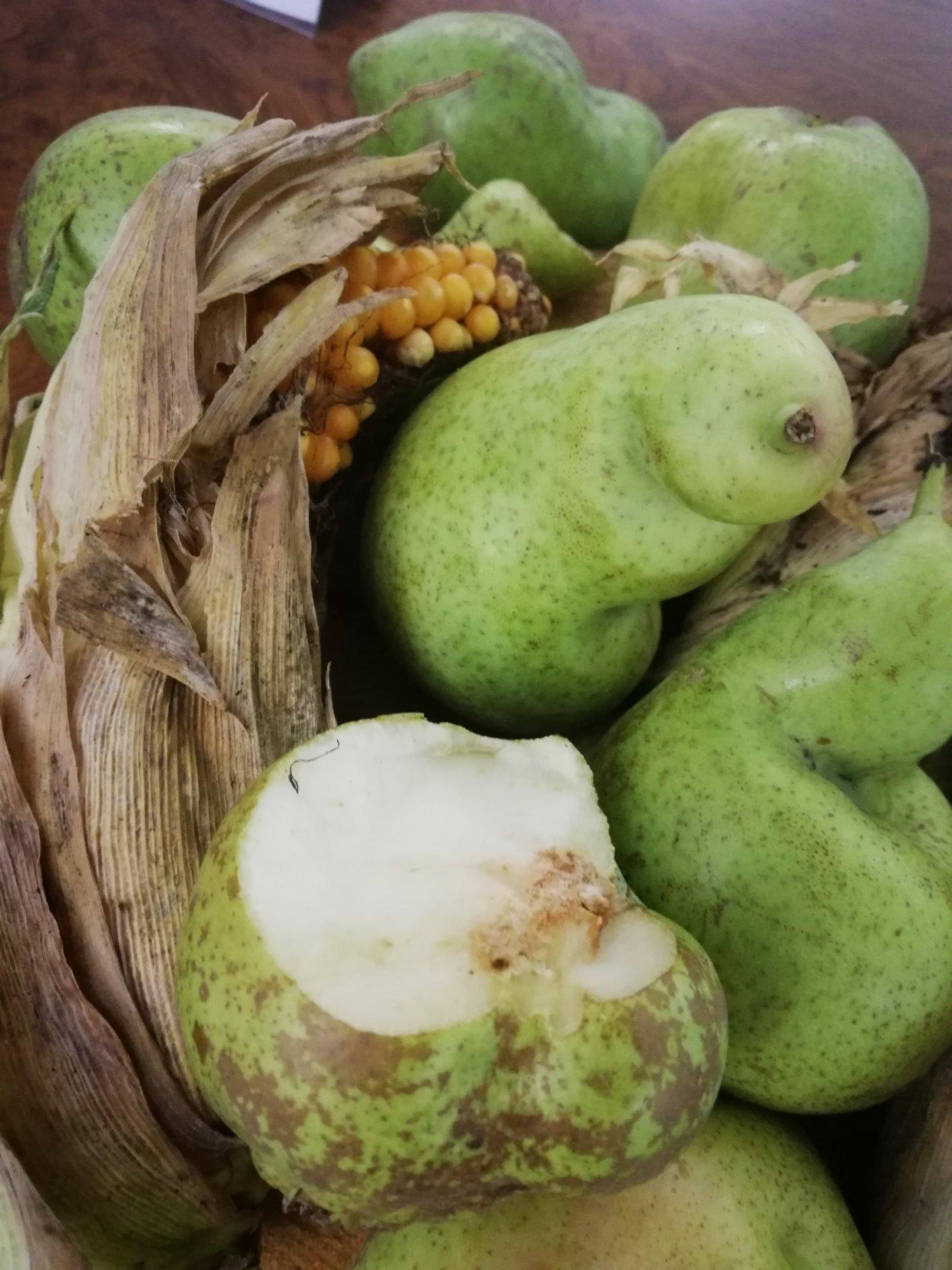 Annata ottima per la qualità e quantità di mele e pere falcidiate dalla cimice asiatica. Incontro oggi sulla questione, la situazione torna alla normalità.