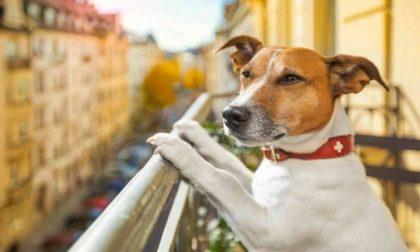Basta animali su balconi: arrivano le sanzioni