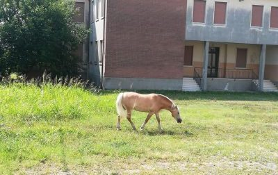 Biblioteca Montecchia il giardiniere è un cavallo