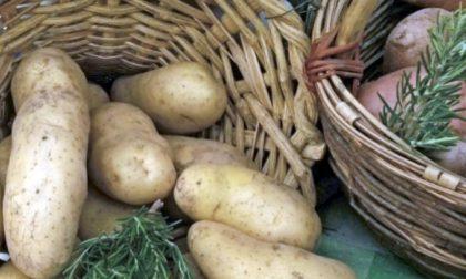 A Bolca è tempo di festa della patata