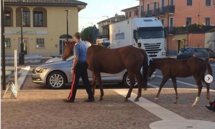 Cavallo in fuga per Castel d'Azzano