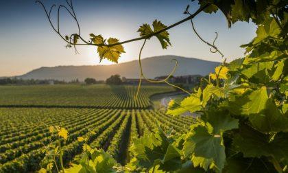 Vino: la Regione mette sul piatto 12,5 milioni per la promozione