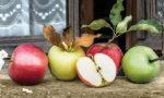 66° Festa della Mela di Zevio: si parte con un convegno sulla sostenibilità