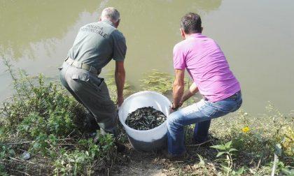 Immesse migliaia di carpe e tinche nei fiumi veronesi