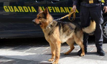 Droga a scuola a Verona due ragazzine fermate con eroina e hashish