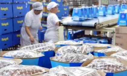 Melegatti, anche Alessandro Gassmann saluta il ritorno al lavoro degli operai