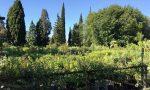 Nuovi alberi in arrivo a Villafranca