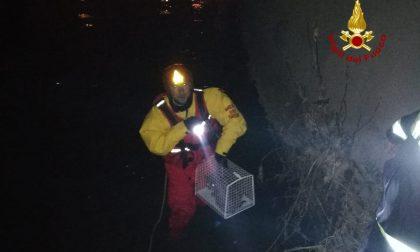 Gatta vola per venti metri finendo nel Bacchiglione, salvata dai pompieri FOTO