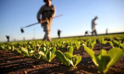 Imprese agricole, oltre 13mila contratti nel terzo trimestre, trasparenza e legalità nei campi
