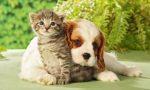 Nuovo servizio per gestire gli animali da affezione di chi è malato o in quarantena
