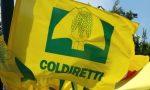 Agricoltura e solidarietà: sostegno a Telethon con i giovani di Coldiretti Verona