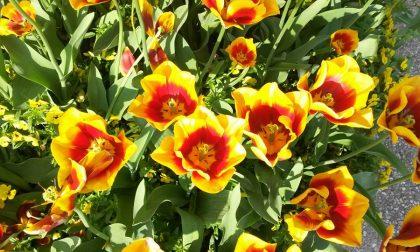 8 marzo Festa della Donna, un racconto a tinte rose
