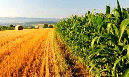 Agricoltura: mezza provincia è in affitto