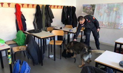 Droga vicino alla scuola, intervento dei carabinieri a Colognola ai Colli