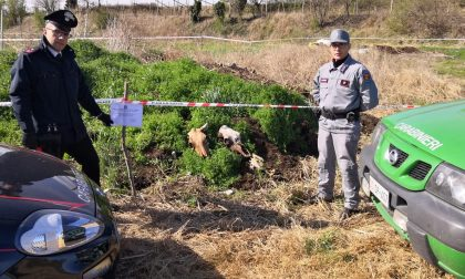 Smaltimento abusivo di carcasse animali a Lazise
