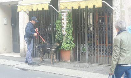 Droga in una fioriera, decisivo ancora il supporto dei cani poliziotto