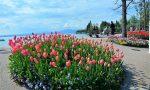 Bardolino, Comune fiorito più bello d'Italia