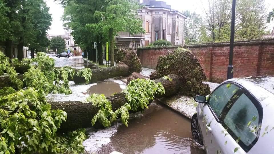 Maltempo a Verona pioggia e grandine e nella Bassa sradicati due enormi alberi
