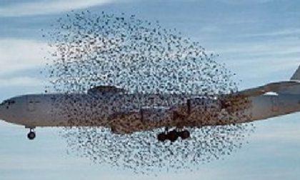 Stormo di uccelli blocca il volo Verona-Catania