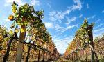 Vinitaly: Coldiretti, settore del vino lavoro per 1,3 milioni di persone