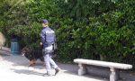 Marijuana nel calzino: sequestrati 83 grammi di sostanza a Verona
